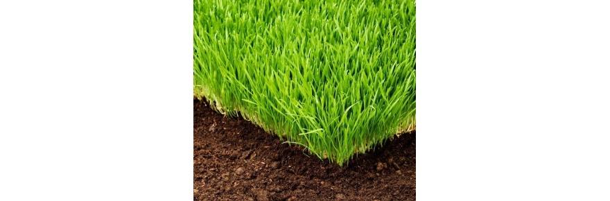 Nasiona traw i Nawozy